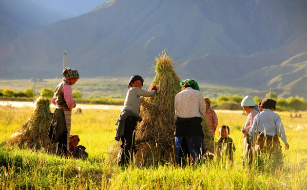 Barley fuelled farmers' spread onto Tibetan plateau : Nature News & Comment