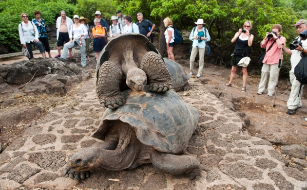 Key Galapagos research station in trouble   Nature News   Comment 7a15f3e10ab
