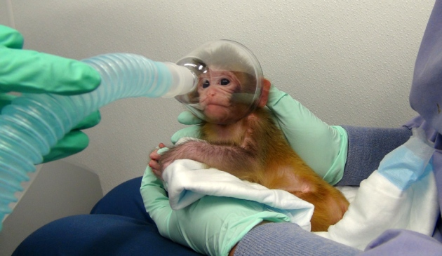 1 - NIH defends monkey experiments - Science and Research