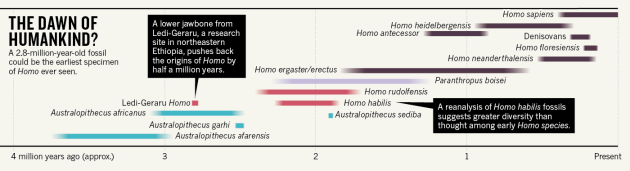 A timeline of Homo evolution