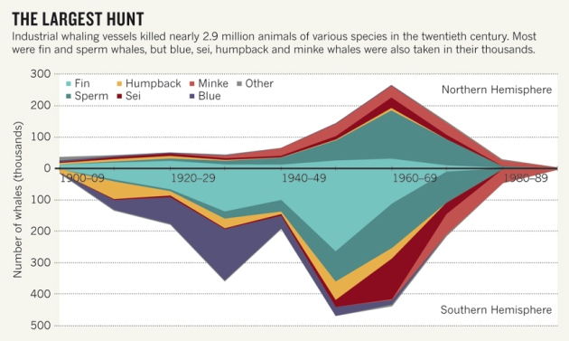 World Wide Sperm Whale Population Graph