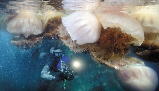 These are moon jellyfish  They are one of the most recognizable types of  jellyfish  Frank D  Lanterman Regional Center