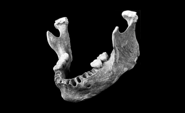 Early European May Have Had Neanderthal Great Great Grandparent