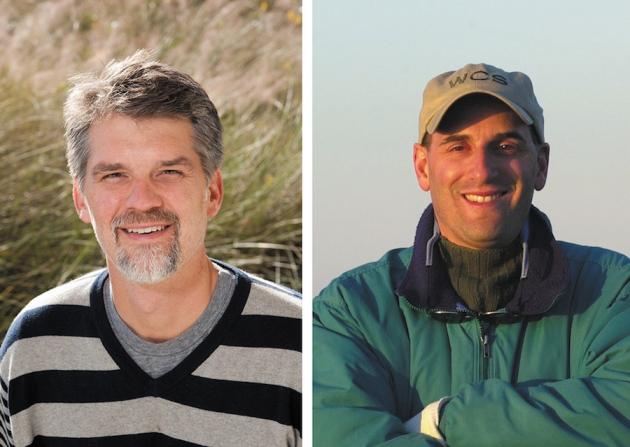 Doug Nowacek/Duke University (esq); Howard Rosenbaum/WCS Ocean Giant/Nature