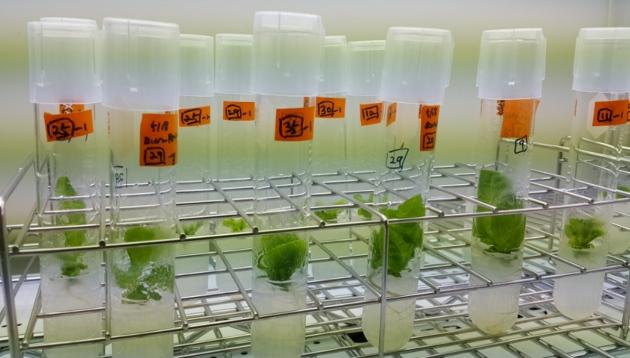CRISPR tweak may help gene-edited crops bypass biosafety regulation