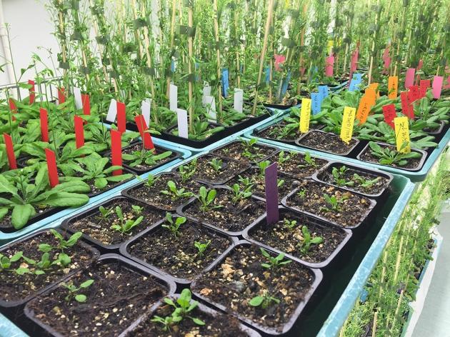 Genetically engineered plants EU  - Magazine cover
