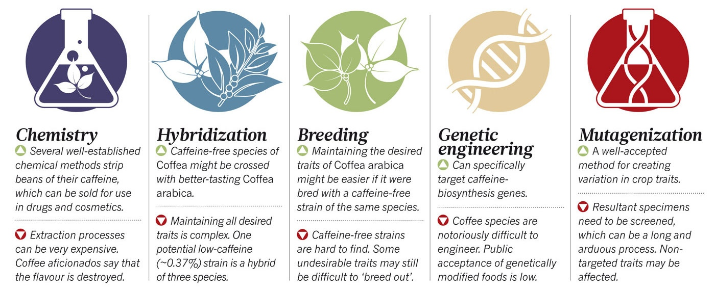 Decaffeinated Vs Naturally Decaffeinated