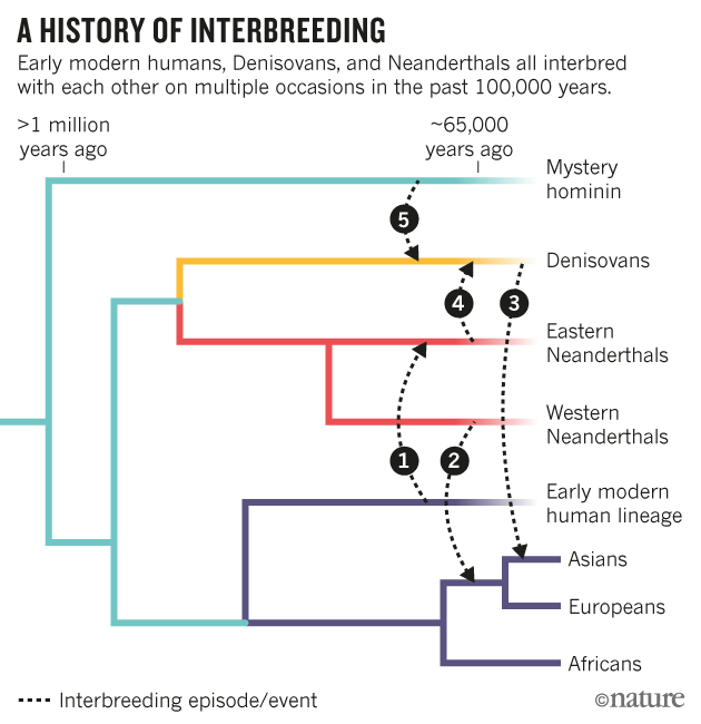 humans the evolution of the homo sapiens species Discovery of oldest human fossil fills evolutionary gap  homo—of which  homo sapiens are the only remaining species—that are 23 million.