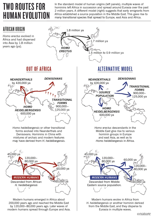 two theories about the origin of modern humans Human evolution - theories of bipedalism: there are many theories that attempt to explain why humans are bipedal, but none is wholly satisfactory increased speed can be ruled out immediately because humans are not very fast runners.