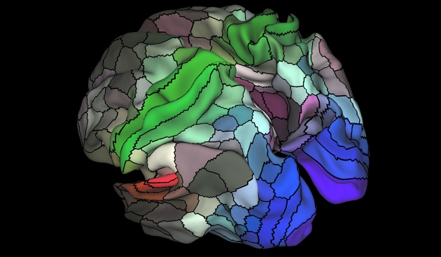 Human Brain Mapped In Unprecedented Detail Nature News Comment