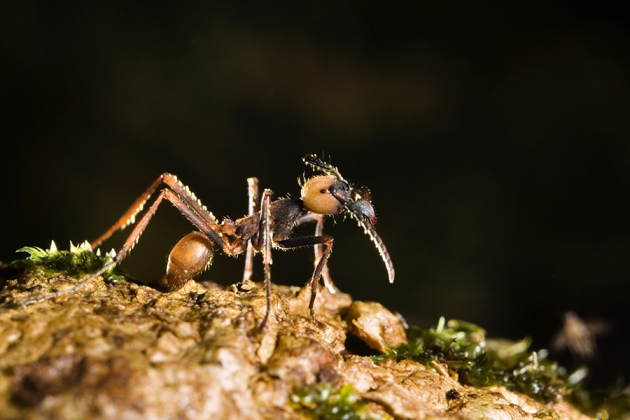 @ Nature/Konrad Wothe/Imagebroker/FLPA