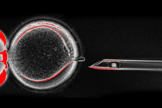 WEB_mitochondrial_NATURE.jpg