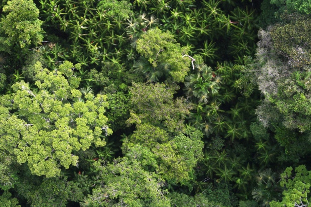 Ancient human tree cultivation shaped Amazon landscape