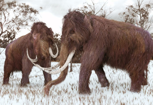 Dying woolly mammoths were in 'genetic meltdown' : Nature News & Comment