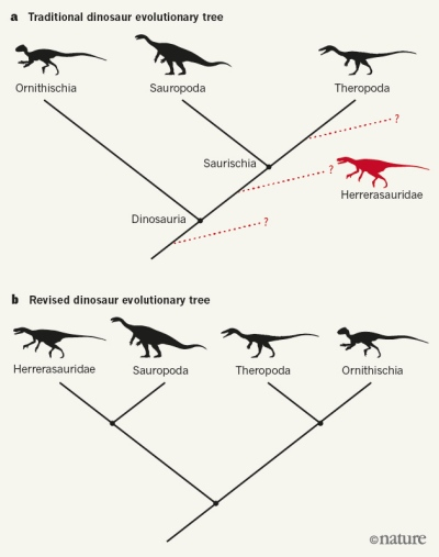 New idea shakes up dinosaur family tree for T. Rex and pals