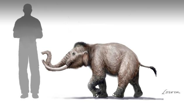 Leshyk-dwarfmammoth3.jpg