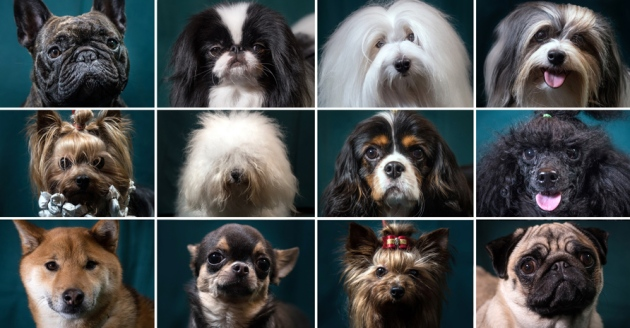 Mapping the canine genome reveals origin of dog breeds