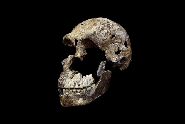 Modern Human Ancestor Homo Naledi Discovered in South Africa