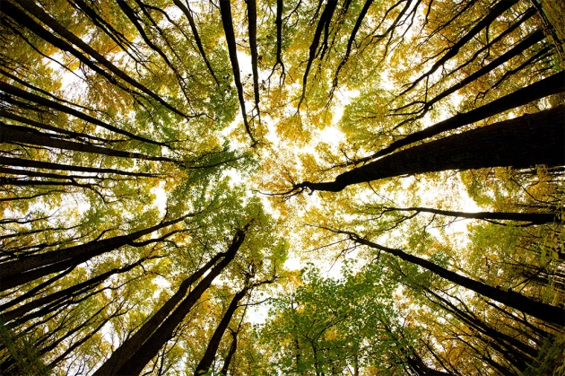 Trees In Eastern Us Head West As Climate Changes 1 on Plants Around Us