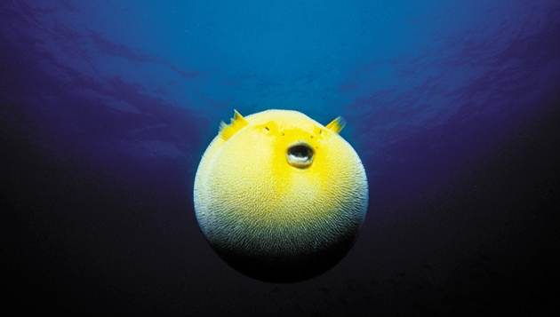 Biodiversity moves beyond counting species : Nature News ...