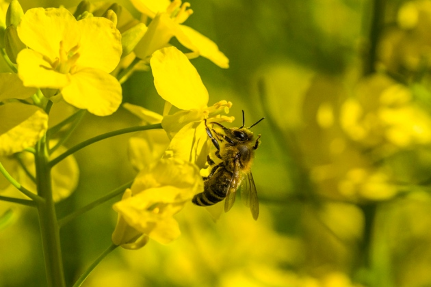 Pesticide effects on bees questioned