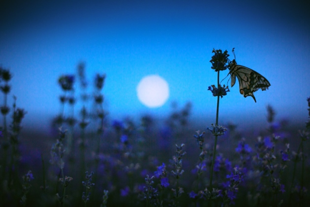 Nocturnal Pollinators Go Dark Under Street Lamps Nature