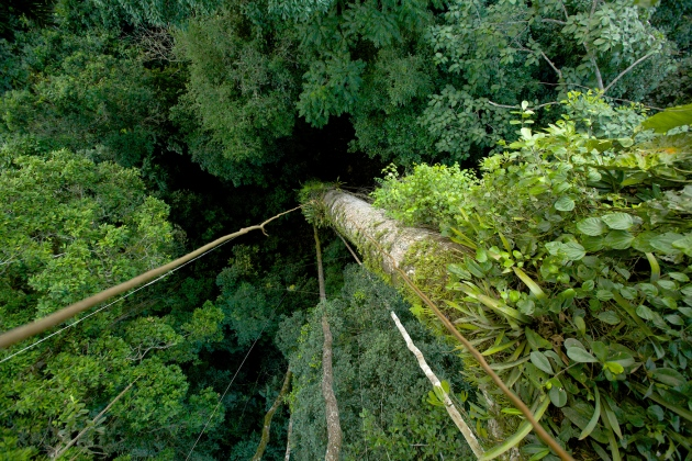 Tropical forests have become a net carbon source