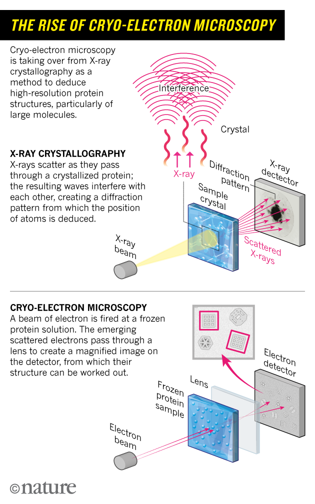 Cryo electron microscopy wins chemistry nobel nature news comment so the researchers turned to electron microscopy see the rise of cryo electron microscopy and in 1975 produced their first 3d model of the protein ccuart Gallery