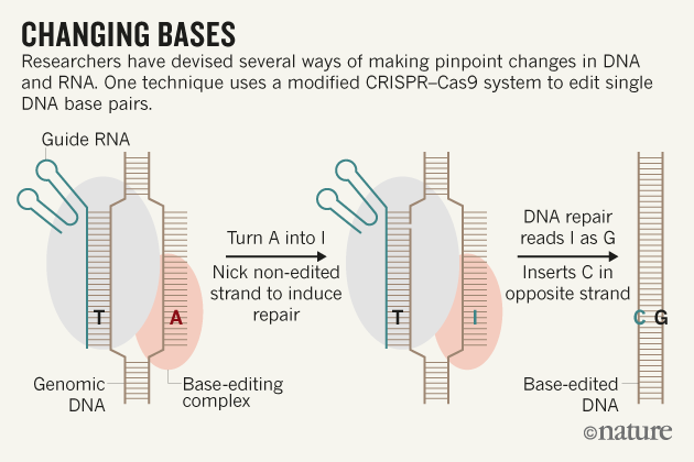 CRISPR Can Now Be Used to Edit Individual Bases