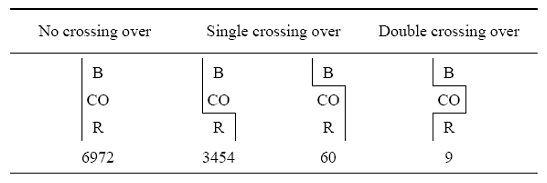 Three of Sturtevant's fly traits are organized in a three-column table in various combinations. The first column shows a single combination of the three traits that does not involve a cross-over event. The middle column shows two combinations of the three traits involving a single cross-over event. The rightmost column shows a single combination of the three traits involving a double cross-over event. The gametic ratio, or presence of recombinants, is shown below each combination of traits.