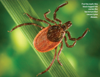 A high magnification photograph shows an adult tick perched on a green stem. The tick has eight brown legs and an oviform body that is brown close to the head and orange toward the back.