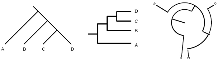 Types Of Phylogenetic Trees Learn Science At Scitable