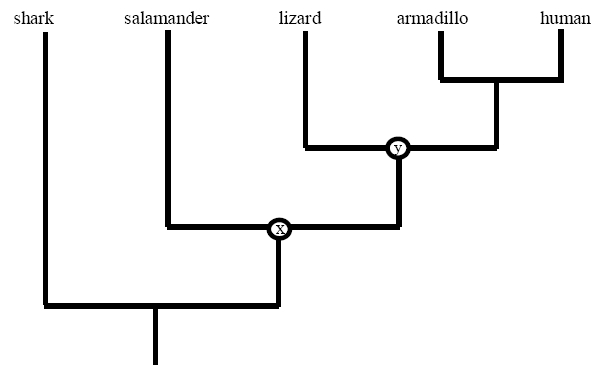 Trait Evolution On A Phylogenetic Tree Learn Science At Scitable