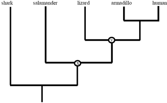 Trait evolution on a phylogenetic tree learn science at scitable a phylogenetic tree diagram shows evolutionary relationships between sharks salamanders lizards armadillos ccuart Choice Image