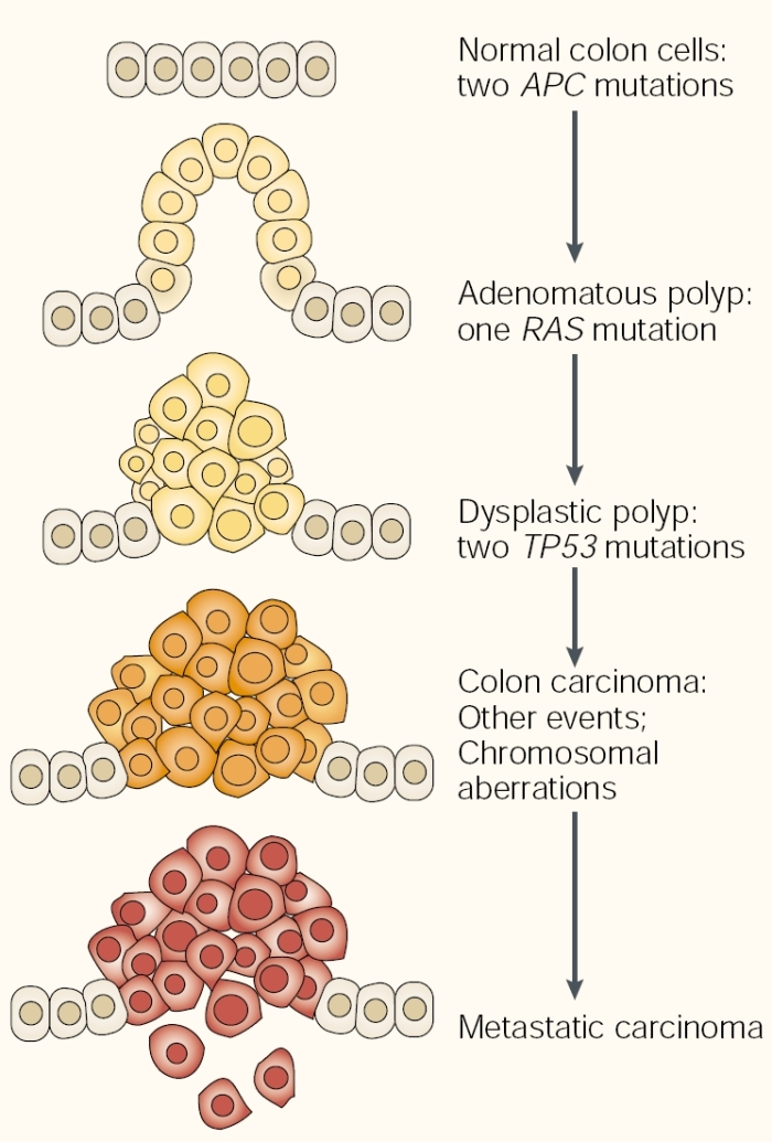 cancer and cell division relationship questions