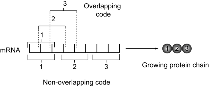 Image result for genetic code is non overlapping