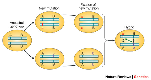 Evolutionary Genetics Of Hybrid Incompatibility Learn Science At Scitable