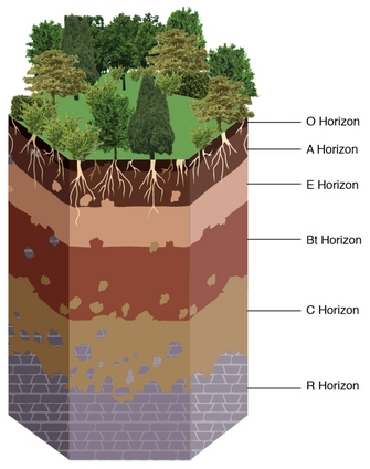 Example soil with designations that communicate the soil formation processes occurring in each horizon.