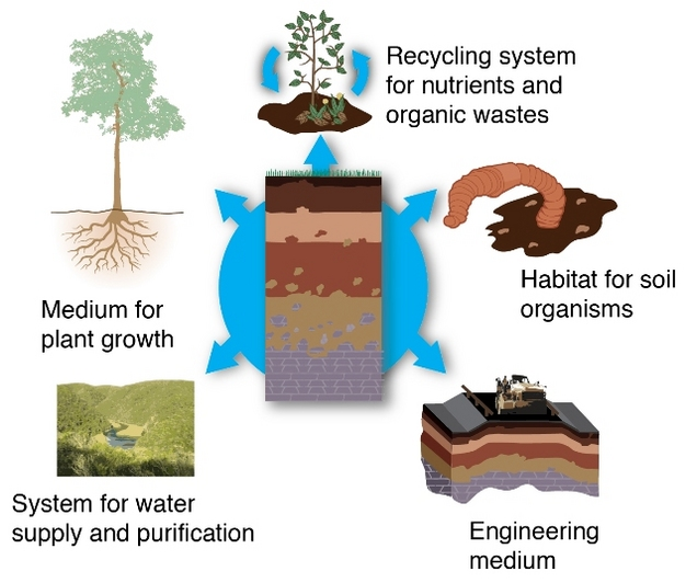Soils as ecosystem service providers.