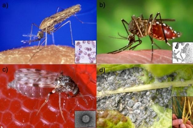Delhi High court warning to Delhi Govt. over Dengue-Chikungunya case