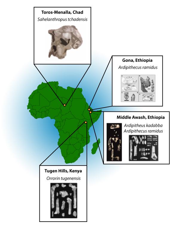 Que muestra la colocación de las localidades de homínidos más tempranos Mapa y algunos de los especímenes recuperados.