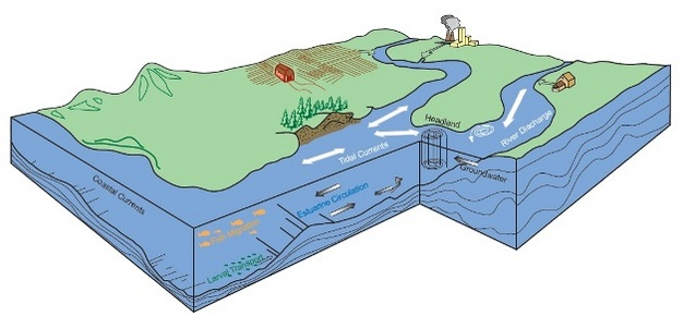 Estuaries Where The River Meets The Sea Learn Science At Scitable