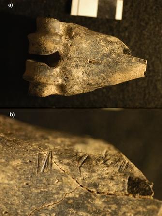 (a) 1.5 million-year-old fossil antelope lower leg bone (metapodial) from Koobi Fora, Kenya, bearing cut marks; (b) close-up of these cutmarks.