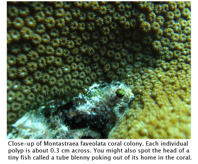 Why Are Coral Reefs Important?   Saltwater Science   Learn