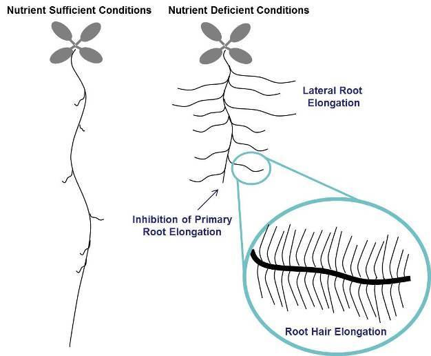 Plant Soil Interactions Nutrient Uptake Learn Science At Scitable