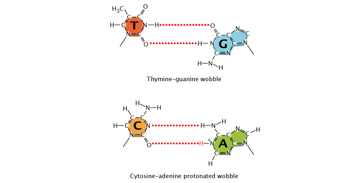 in dna adenine pairs with