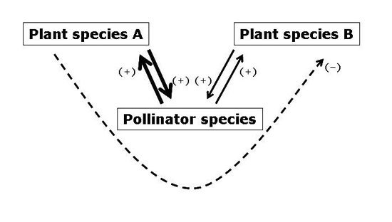Mutualistic interactions learn science at scitable plant species competing for pollination services ccuart Choice Image
