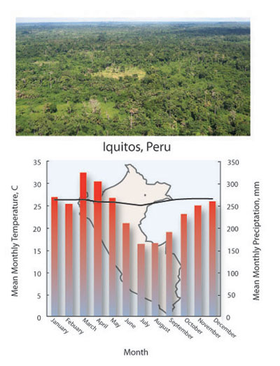 Tropical Forest Biome Climate Diagram