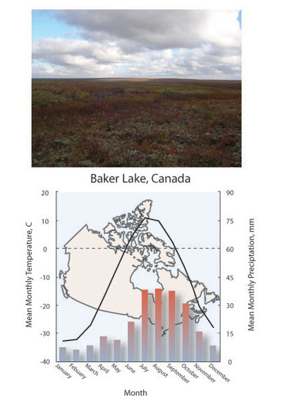 terrestrial biomes learn science at scitable Temperate Forest Presentation