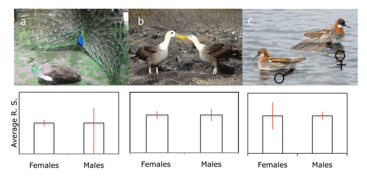 Variance in reproductive success explains which sex is subject to stronger sexual selection